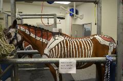 Horse with skeleton drawn on it