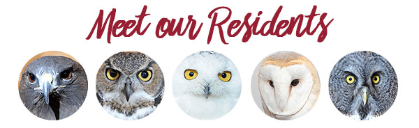 Image link to residents page of WSU Raptor Club