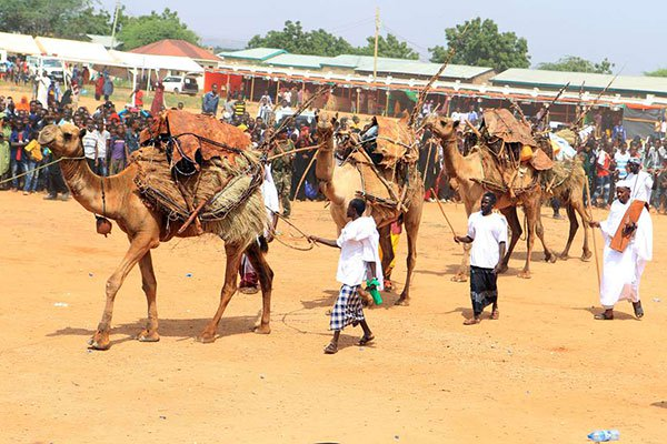 Camels paraded during Somali cultural week in Mandera Animals are host to deadly viruses